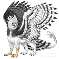 Harpy Eagle griff by BronzeHalo