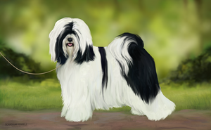 TKC World Dog Show 2018 January - Picasso by aes0