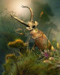 A Stag Beetle by MichaelF77