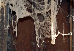 Spider web by Fire-Fuel