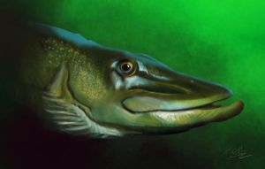 Northern pike by nunt