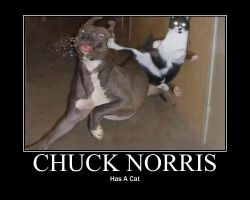 Chuck Norris' Cat by 6SeaCat9