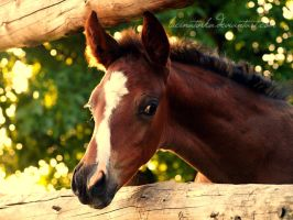 Curious by lucinatorka