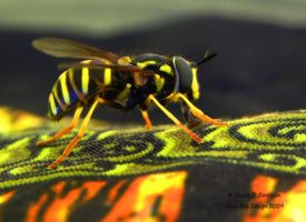 Hoverfly by Dreamz-of-Twilight