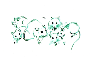 .studies of rat noses by rionka