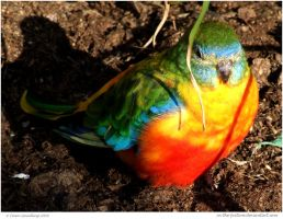 Turquoise Parrot by In-the-picture