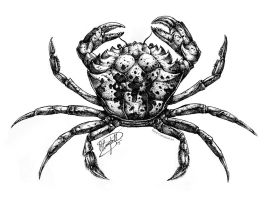 Carcinus maenas by ReneCampbellArt