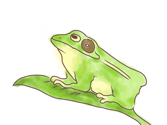 Frog by TinyParakeet