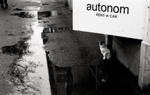 Rent a....cat ?? by mm35street