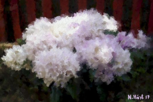 Rhododendron for Sue by Nigel-Hirst