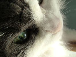 Freak Eyes of my Cat by Mirally