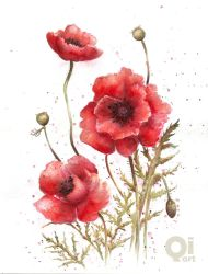 poppies by qi-art