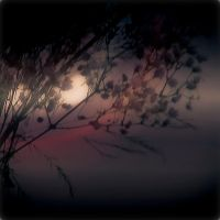 dreams in the night by Jasmina-S