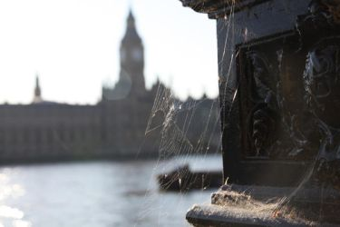 Spiders of Parliament by d3lf
