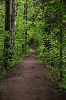 A small path in the forest. by BIREL