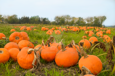 Pumpkin Patch in Denmark by THfreaken