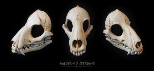Wolf Skull Mask - Full by Bueshang