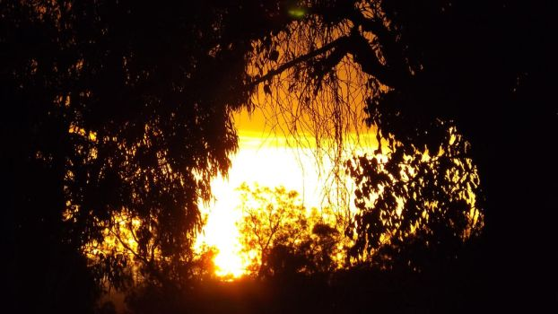 Fiery sunset thru the trees by Ozziegrl