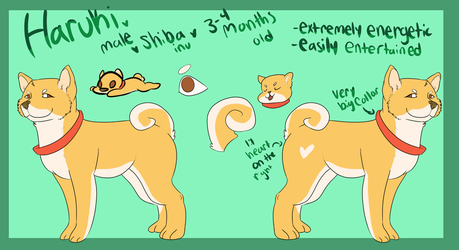 Haruki ref by PUPPYPOWER123