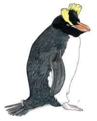 Erect-crested penguin by PaleoAeolos