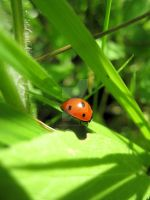 Lady Bug Green by PINK-ROSE14