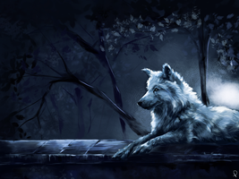 Study of a Wolf by Rommeu