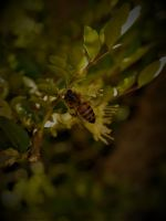 Bee by camilleroc