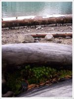 mossy log by maklington