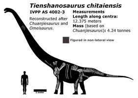 New Tienshanosaurus schematic by Megalotitan