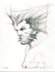 Wolverine Convention Sketch. by simonebianchi