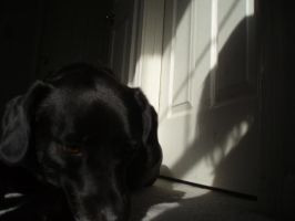dog in shadow by Sunlandictwin