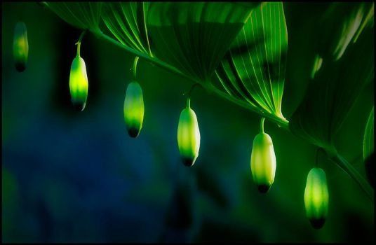 Polygonatum odoratum by eswendel