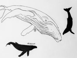Humpback Whale Practice by WowLovely88