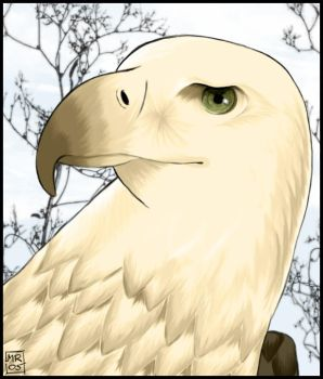 Eagle by melimelo