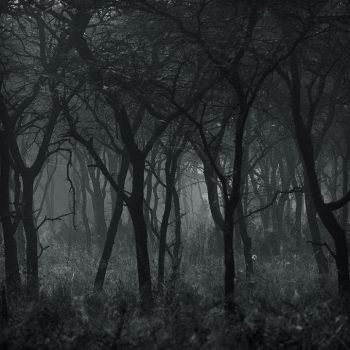 unruly woods by grevys