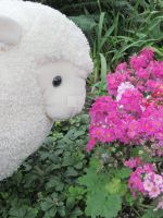 Fat Sheep and Flowers by Ayjah