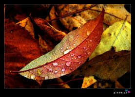autumn drops by pinkblue
