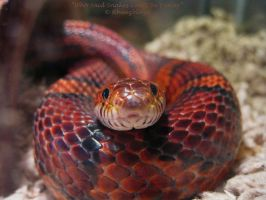 Who Said Snakes Can't Be Funny by FicktionPhotography