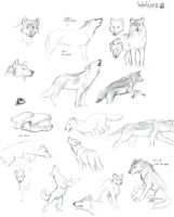 Referenced Wolf Sheet by Kobb