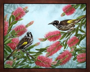 New Holland Honeyeaters by MBoulad
