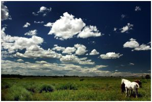 Open Country by Delacorr
