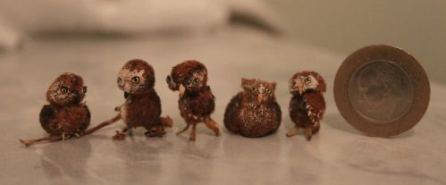 my little owls by canerator