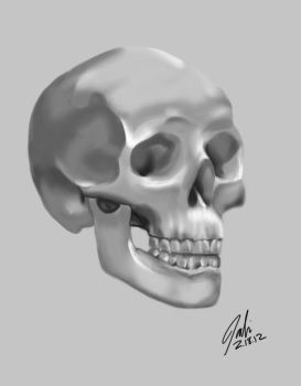 Skull Study by IllustrativeJack