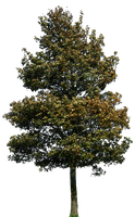 tree 39 png by gd08
