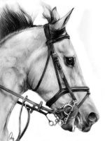 HOW TO DRAW A HORSE by HowToDrawItAll