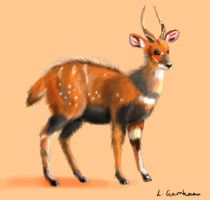 Bush buck by Tianithen
