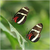 schmetterling XIX by hepiladron