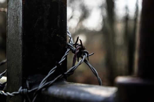Barbed wire by Nitorom