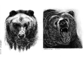 Medvede (Bears) by PatrisB