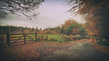 autumn - N.Ireland by atenytom